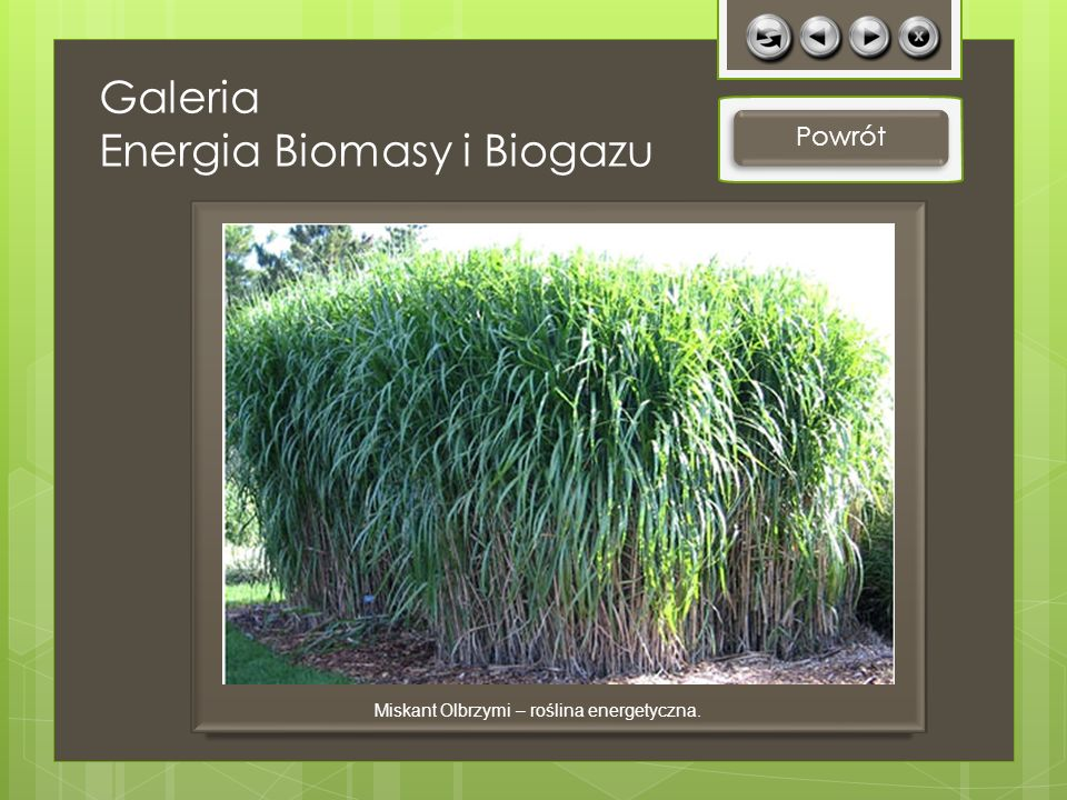Galeria Energia Biomasy i Biogazu