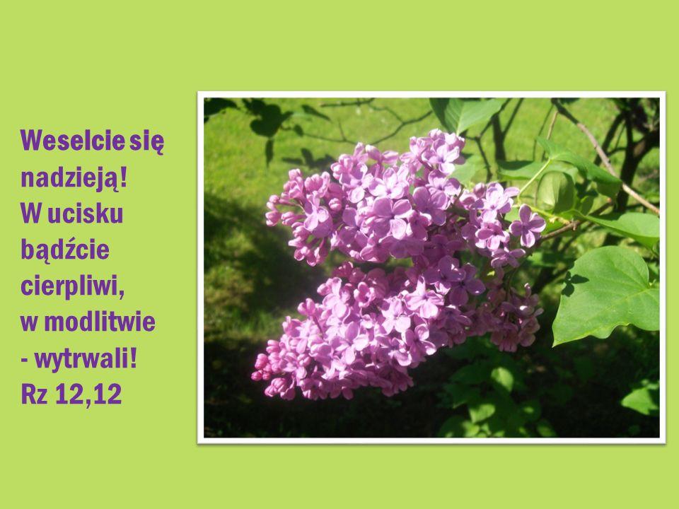Weselcie się nadzieją! W ucisku bądźcie cierpliwi, w modlitwie - wytrwali! Rz 12,12