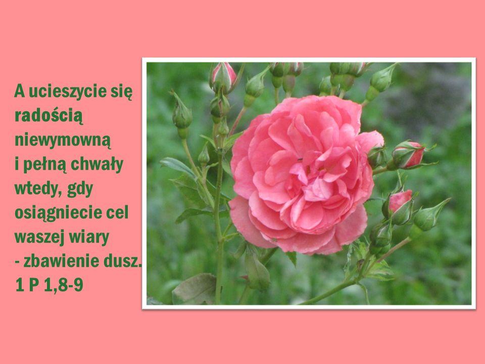 A ucieszycie się radością niewymowną i pełną chwały wtedy, gdy osiągniecie cel waszej wiary - zbawienie dusz.