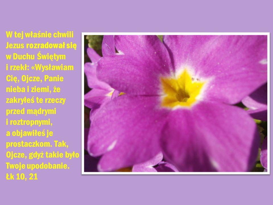 W tej właśnie chwili Jezus rozradował się w Duchu Świętym i rzekł: «Wysławiam Cię, Ojcze, Panie nieba i ziemi, że zakryłeś te rzeczy przed mądrymi i roztropnymi, a objawiłeś je prostaczkom.