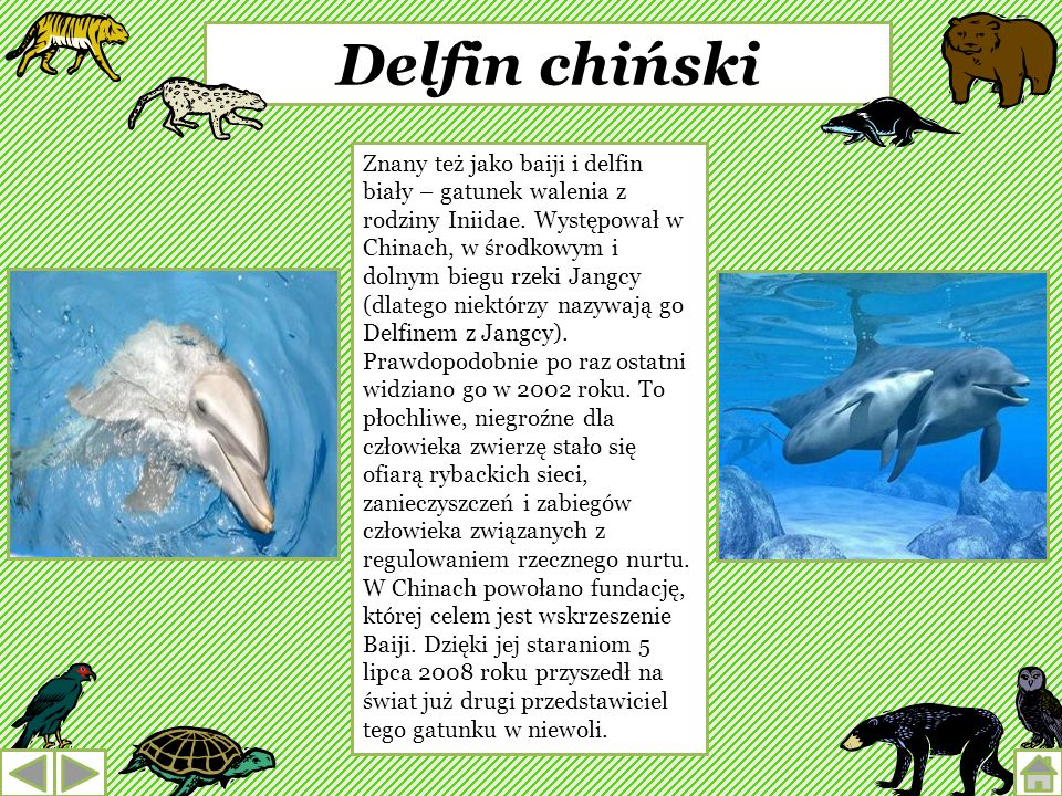 Delfin chiński