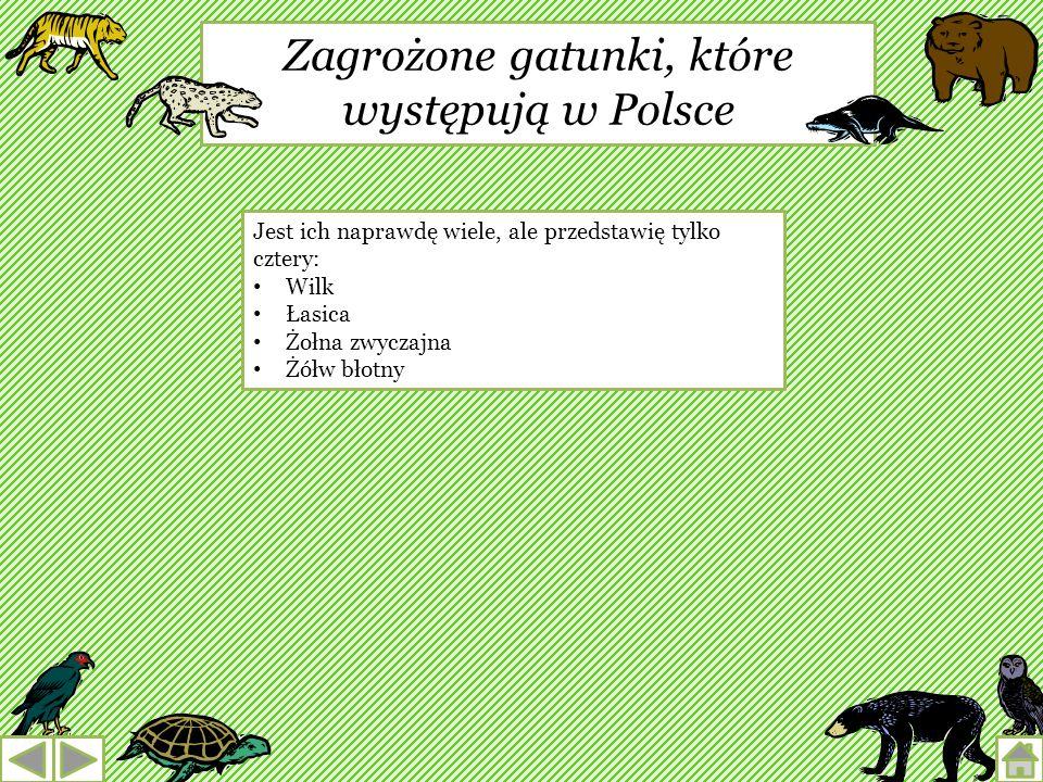 Zagrożone gatunki, które występują w Polsce