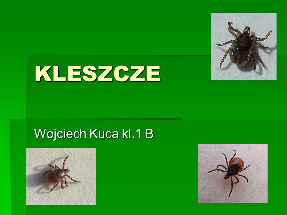 KLESZCZE Wojciech Kuca kl.1 B