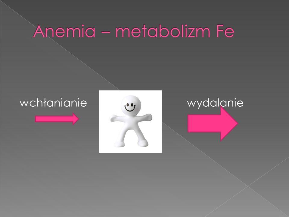 Anemia – metabolizm Fe wchłanianie wydalanie