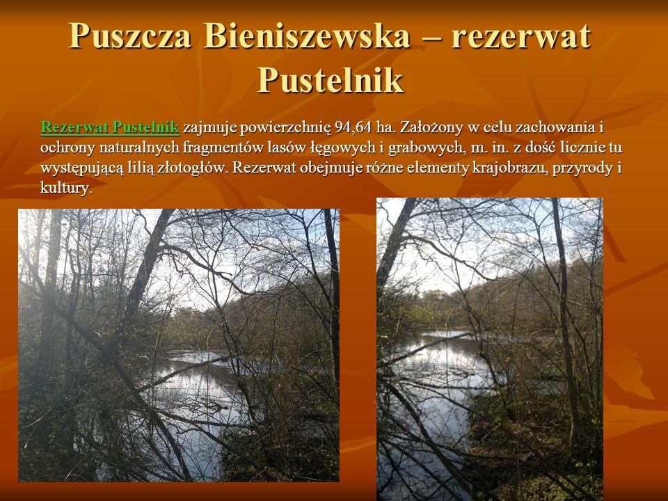Puszcza Bieniszewska – rezerwat Pustelnik