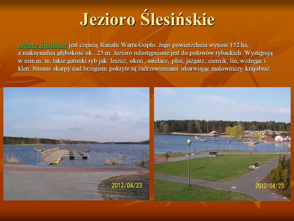 Jezioro Ślesińskie Jezioro Ślesińskie jest częścią Kanału Warta-Gopło. Jego powierzchnia wynosi 152 ha,