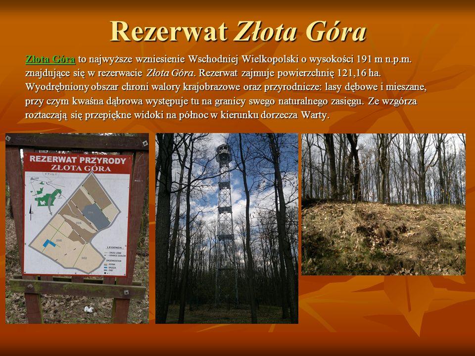 Rezerwat Złota Góra Złota Góra to najwyższe wzniesienie Wschodniej Wielkopolski o wysokości 191 m n.p.m.