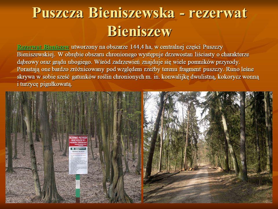 Puszcza Bieniszewska - rezerwat Bieniszew