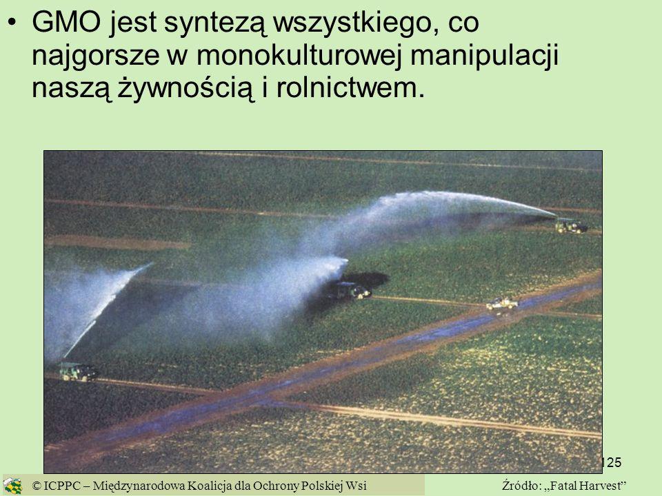 GMO jest syntezą wszystkiego, co najgorsze w monokulturowej manipulacji naszą żywnością i rolnictwem.