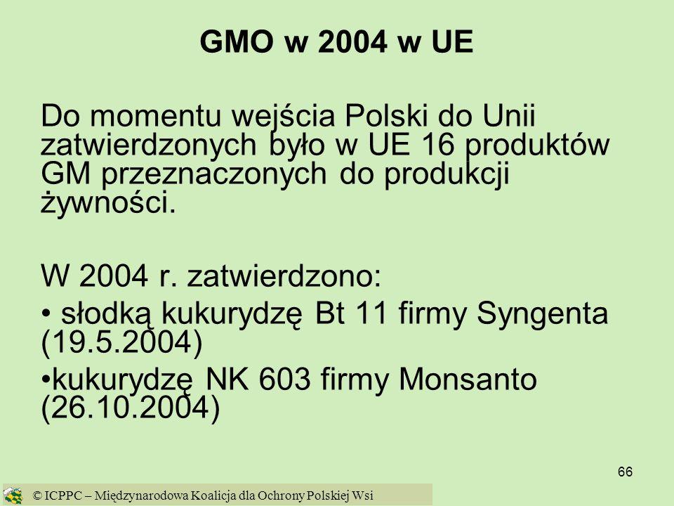 słodką kukurydzę Bt 11 firmy Syngenta (19.5.2004)