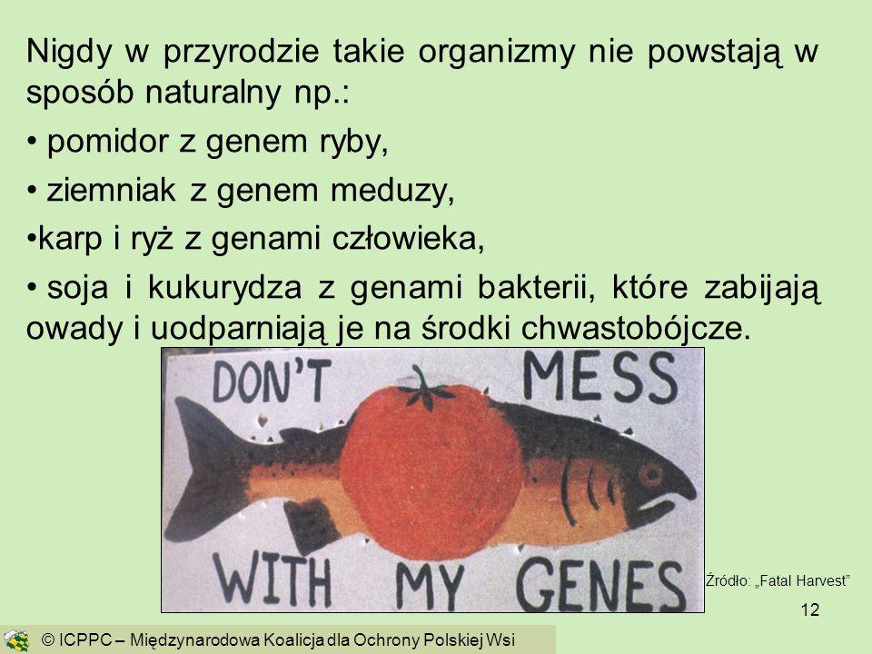 ziemniak z genem meduzy, karp i ryż z genami człowieka,