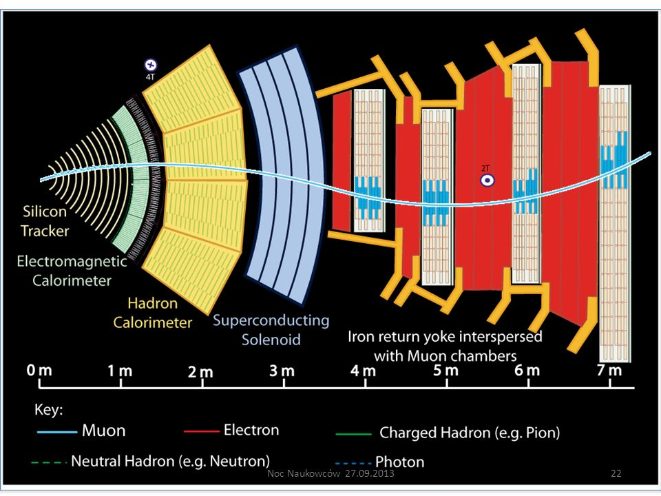 Muon: passing through CMS, bending in the field (both ways, depending on when it is inside or outside of the solenoid) leaving hits in the Tracker layers and the muon chambers before escaping completely