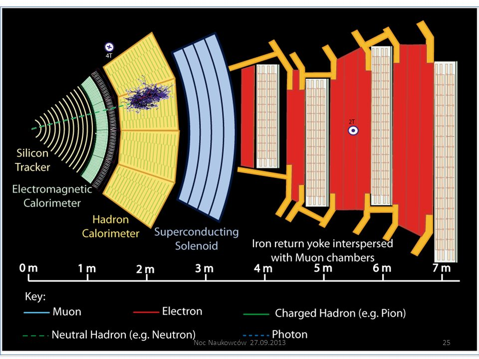 Neutral hadron: Does not bend in the magnetic field and does not leave any signal in the tracker layers; passes through the electromagnetic calorimeter leaving essentially no signal, and is stopped by the hadron calorimeter