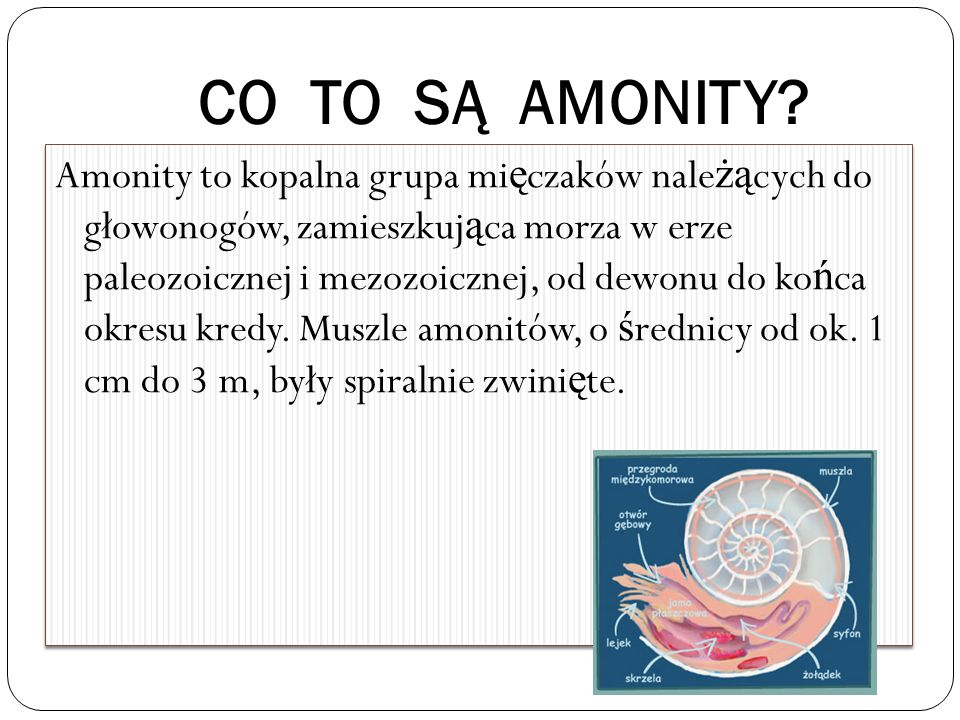 CO TO SĄ AMONITY