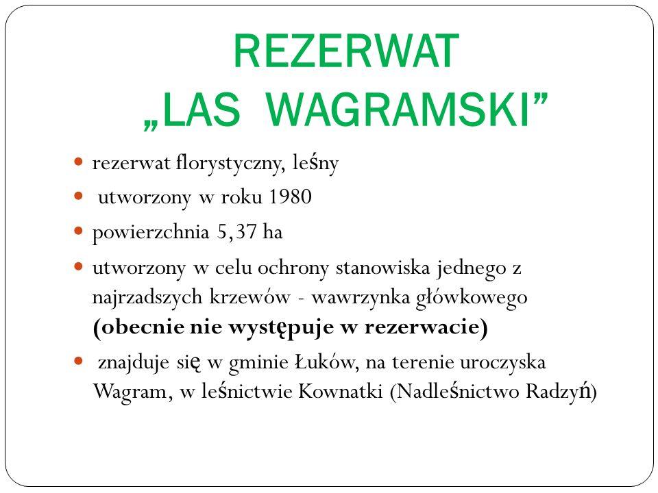 """REZERWAT """"LAS WAGRAMSKI"""