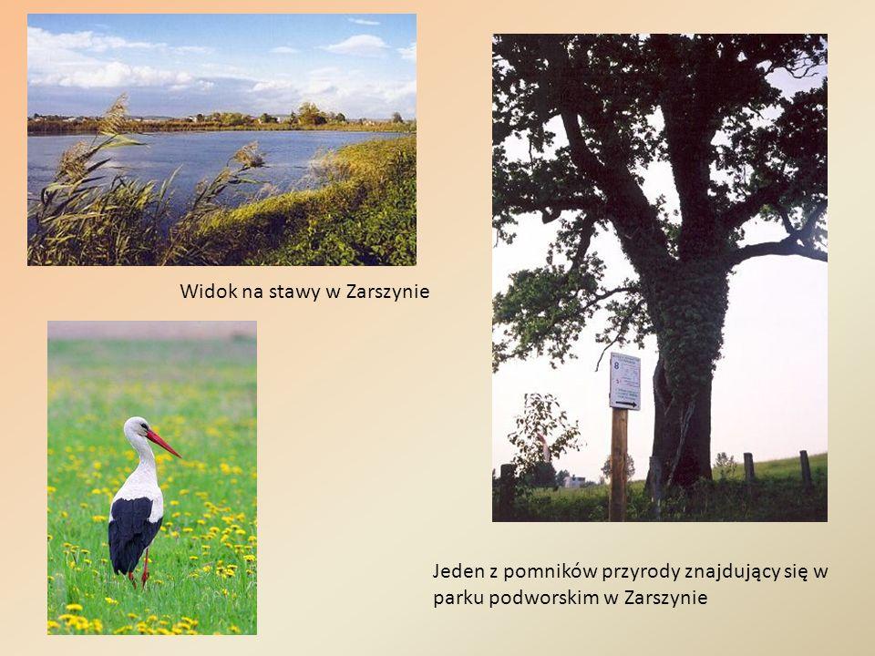 Widok na stawy w Zarszynie