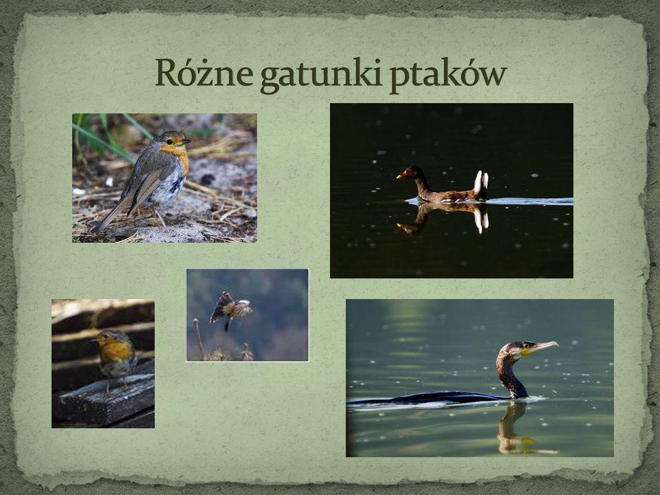 Różne gatunki ptaków