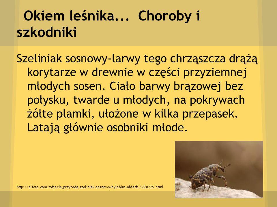 Okiem leśnika... Choroby i szkodniki