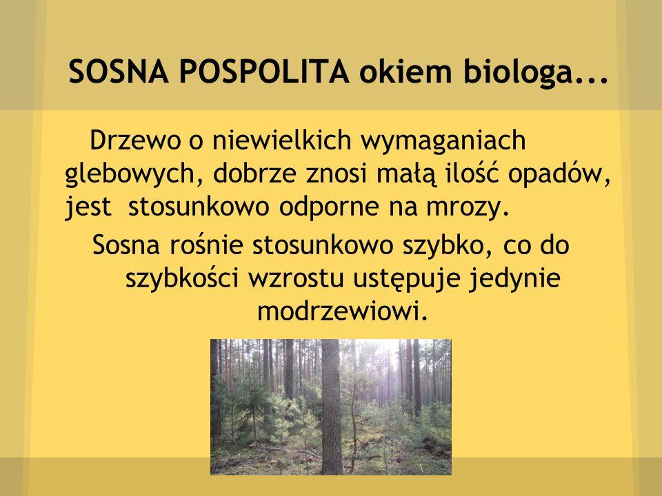 SOSNA POSPOLITA okiem biologa...
