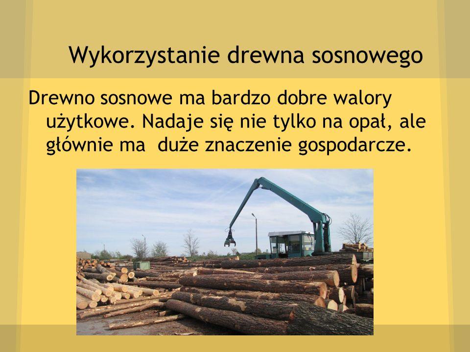 Wykorzystanie drewna sosnowego