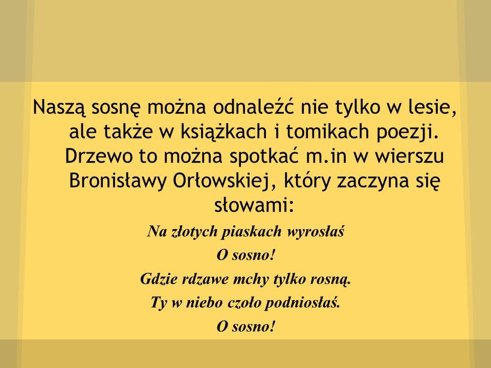 Naszą sosnę można odnaleźć nie tylko w lesie, ale także w książkach i tomikach poezji. Drzewo to można spotkać m.in w wierszu Bronisławy Orłowskiej, który zaczyna się słowami:
