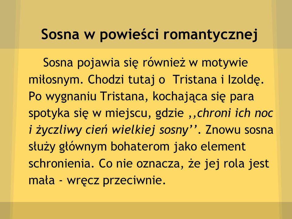 Sosna w powieści romantycznej