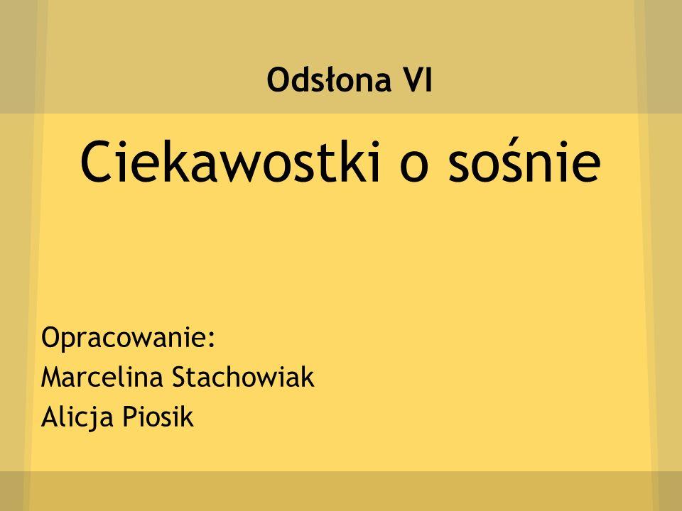 Ciekawostki o sośnie Odsłona VI Opracowanie: Marcelina Stachowiak