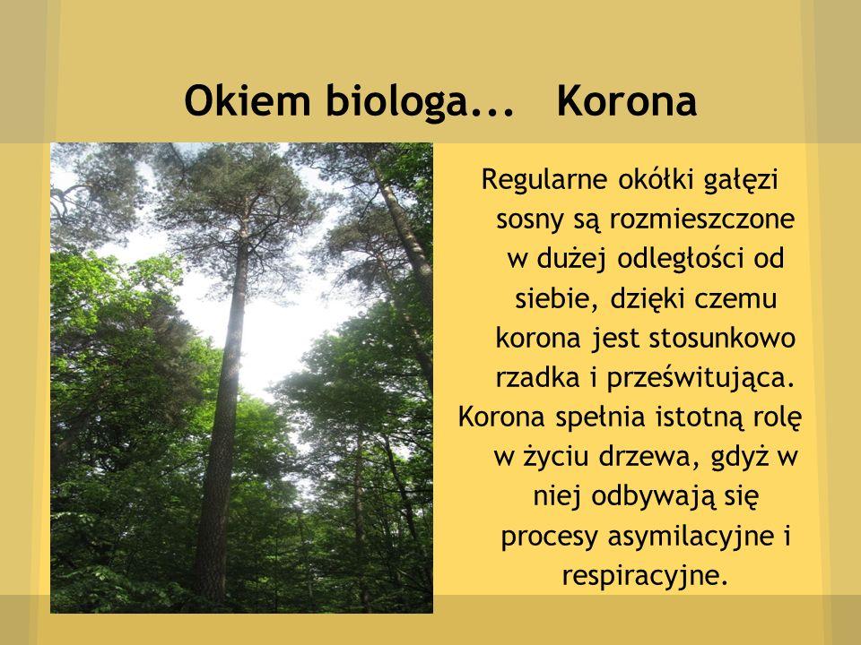 Okiem biologa... Korona