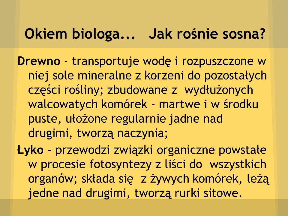 Okiem biologa... Jak rośnie sosna