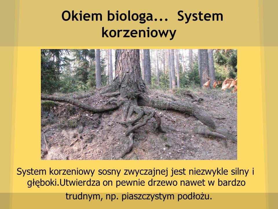 Okiem biologa... System korzeniowy