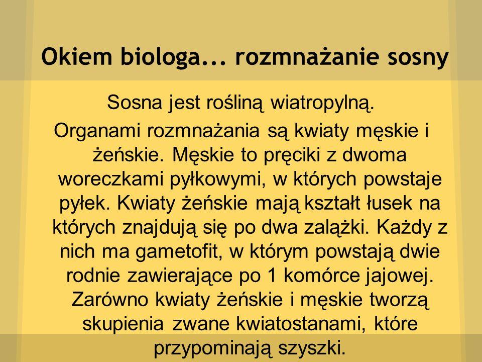 Okiem biologa... rozmnażanie sosny