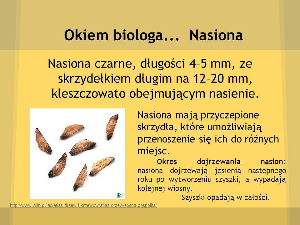 Okiem biologa... Nasiona Nasiona czarne, długości 4–5 mm, ze skrzydełkiem długim na 12–20 mm, kleszczowato obejmującym nasienie.