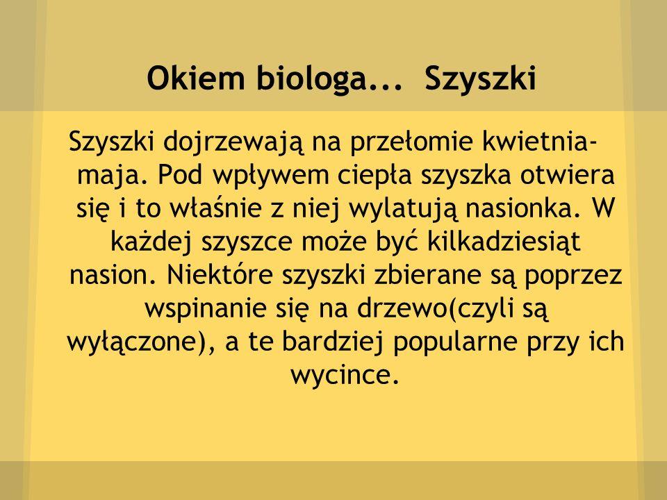 Okiem biologa... Szyszki