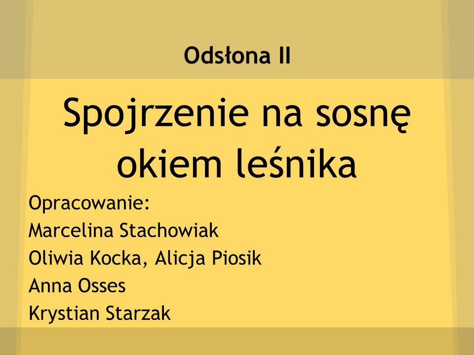 Spojrzenie na sosnę okiem leśnika Odsłona II Opracowanie: