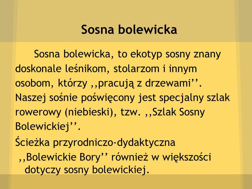 Sosna bolewicka Sosna bolewicka, to ekotyp sosny znany doskonale leśnikom, stolarzom i innym osobom, którzy ,,pracują z drzewami''.