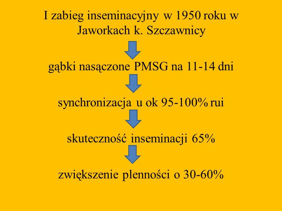 I zabieg inseminacyjny w 1950 roku w Jaworkach k