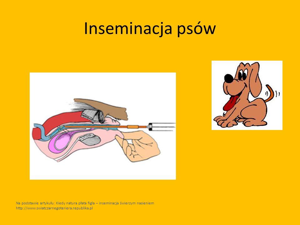 Inseminacja psów Na podstawie artykułu: Kiedy natura płata figla – inseminacja świerzym nasieniem http://www.swiatczarnegoteriera.republika.pl.