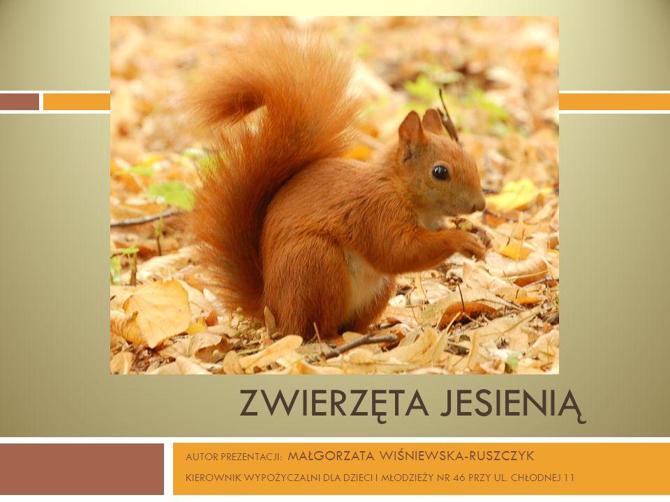 Zwierzęta jesienią AUTOR PREZENTACJI: MAŁGORZATA WIŚNIEWSKA-RUSZCZYK
