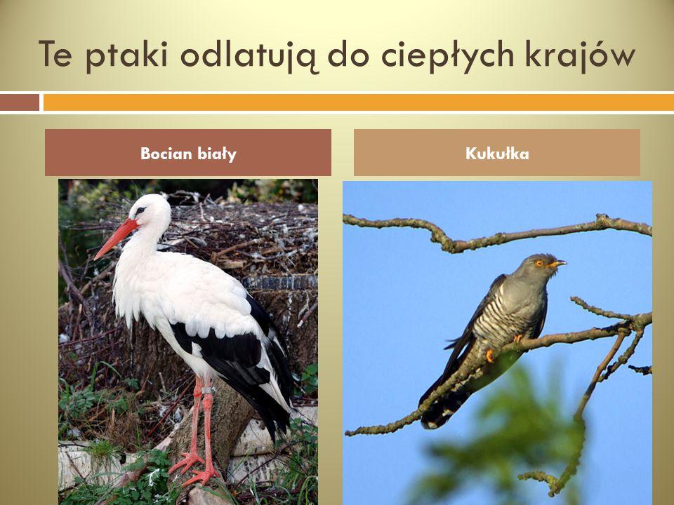 Te ptaki odlatują do ciepłych krajów