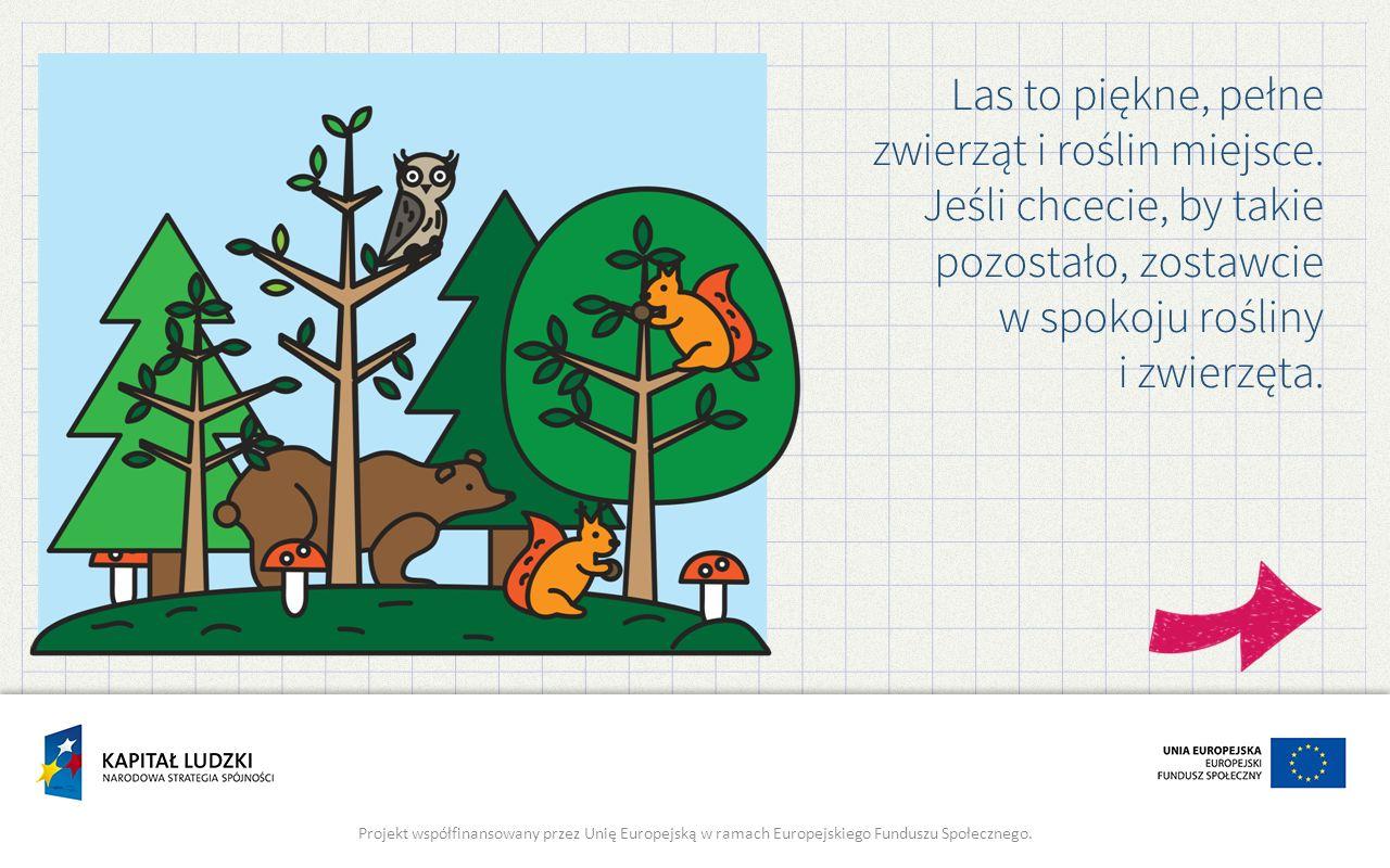 Las to piękne, pełne zwierząt i roślin miejsce