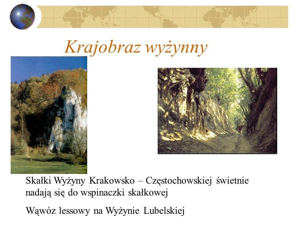 Krajobraz wyżynny Skałki Wyżyny Krakowsko – Częstochowskiej świetnie nadają się do wspinaczki skałkowej.