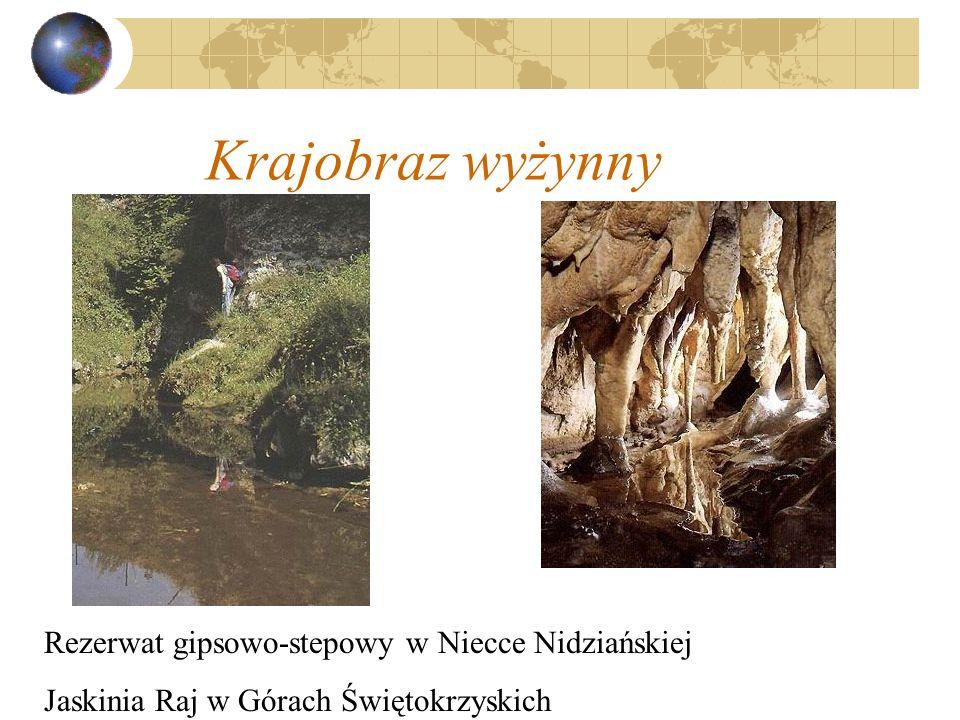 Krajobraz wyżynny Rezerwat gipsowo-stepowy w Niecce Nidziańskiej