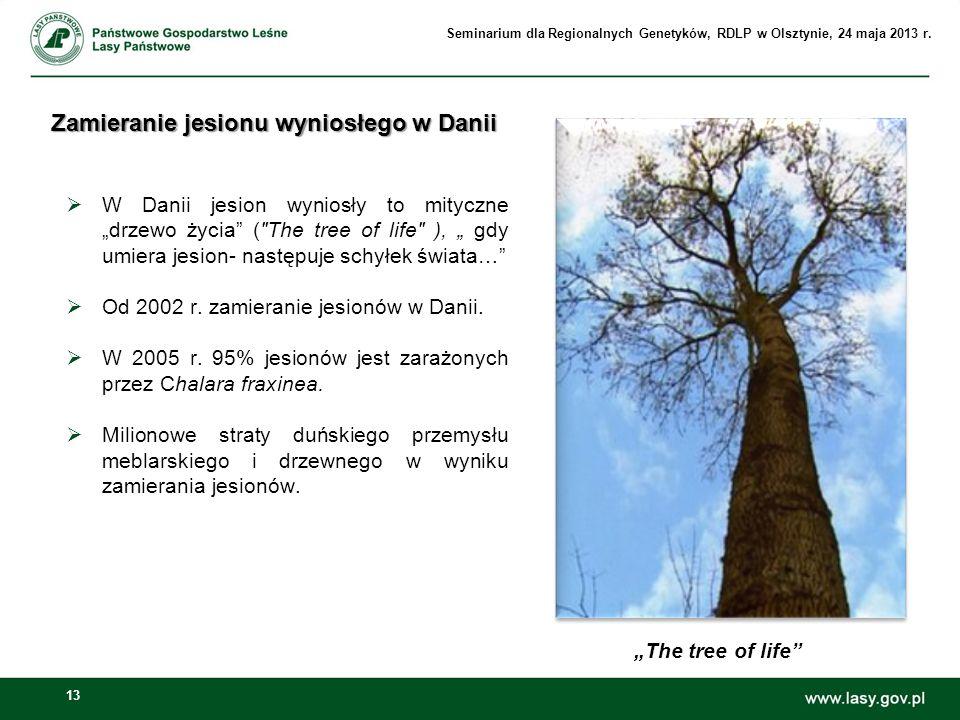 Zamieranie jesionu wyniosłego w Danii