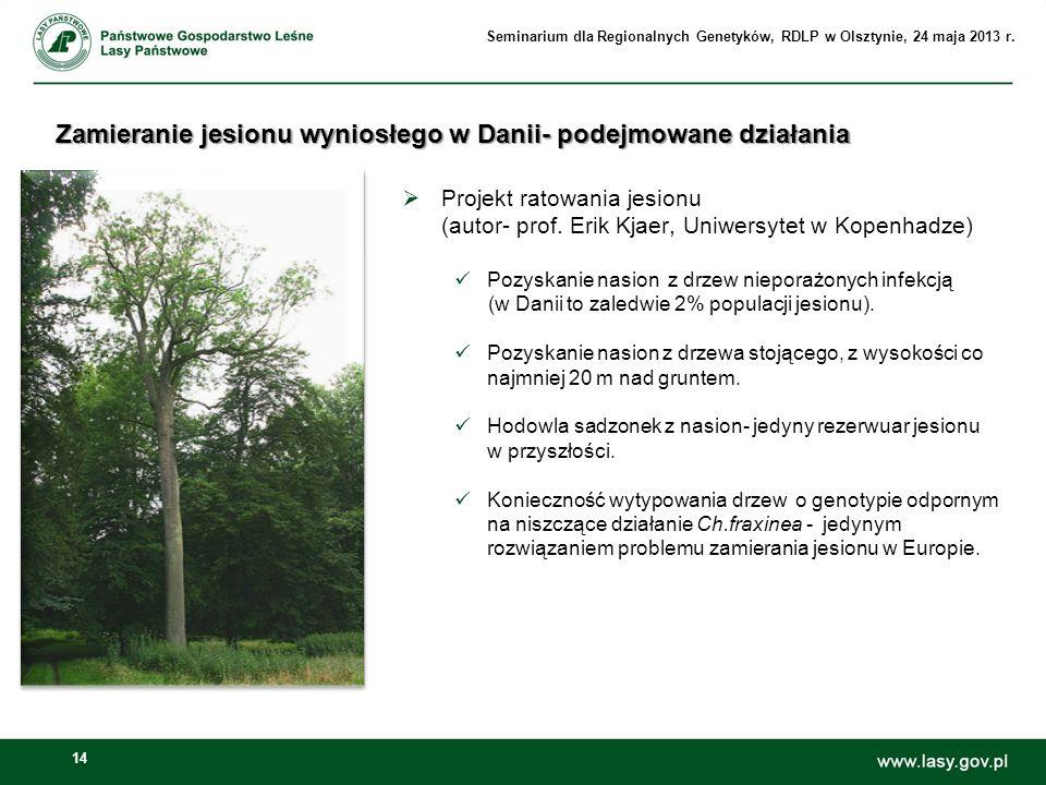 Zamieranie jesionu wyniosłego w Danii- podejmowane działania
