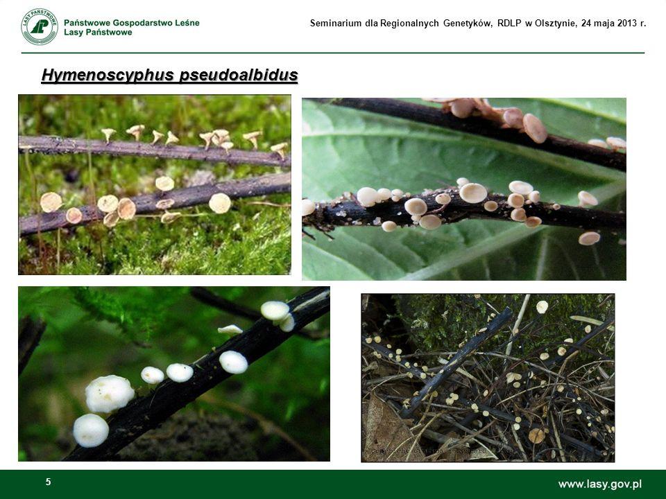 Hymenoscyphus pseudoalbidus