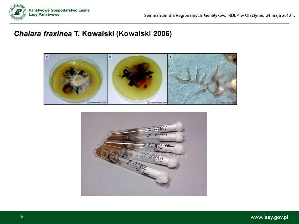 Chalara fraxinea T. Kowalski (Kowalski 2006)