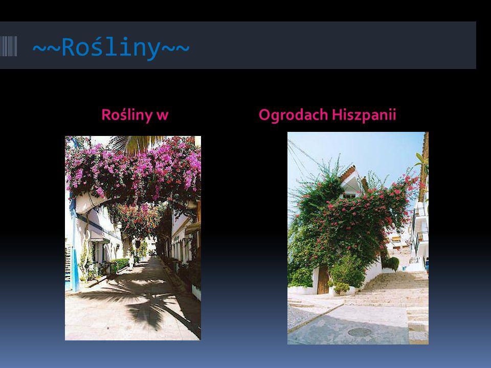 ~~Rośliny~~ Rośliny w Ogrodach Hiszpanii