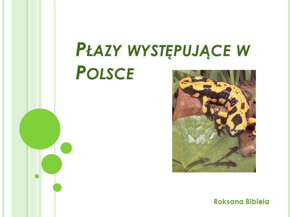 Płazy występujące w Polsce