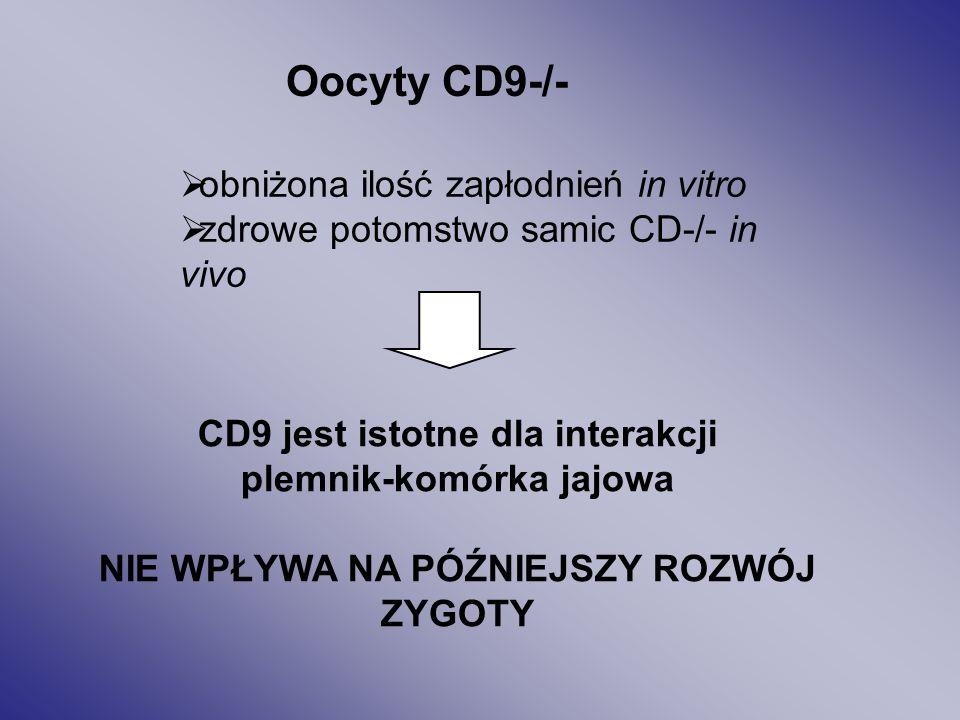 Oocyty CD9-/- obniżona ilość zapłodnień in vitro