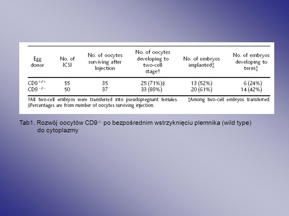 Tab1. Rozwój oocytów CD9-/- po bezpośrednim wstrzyknięciu plemnika (wild type)